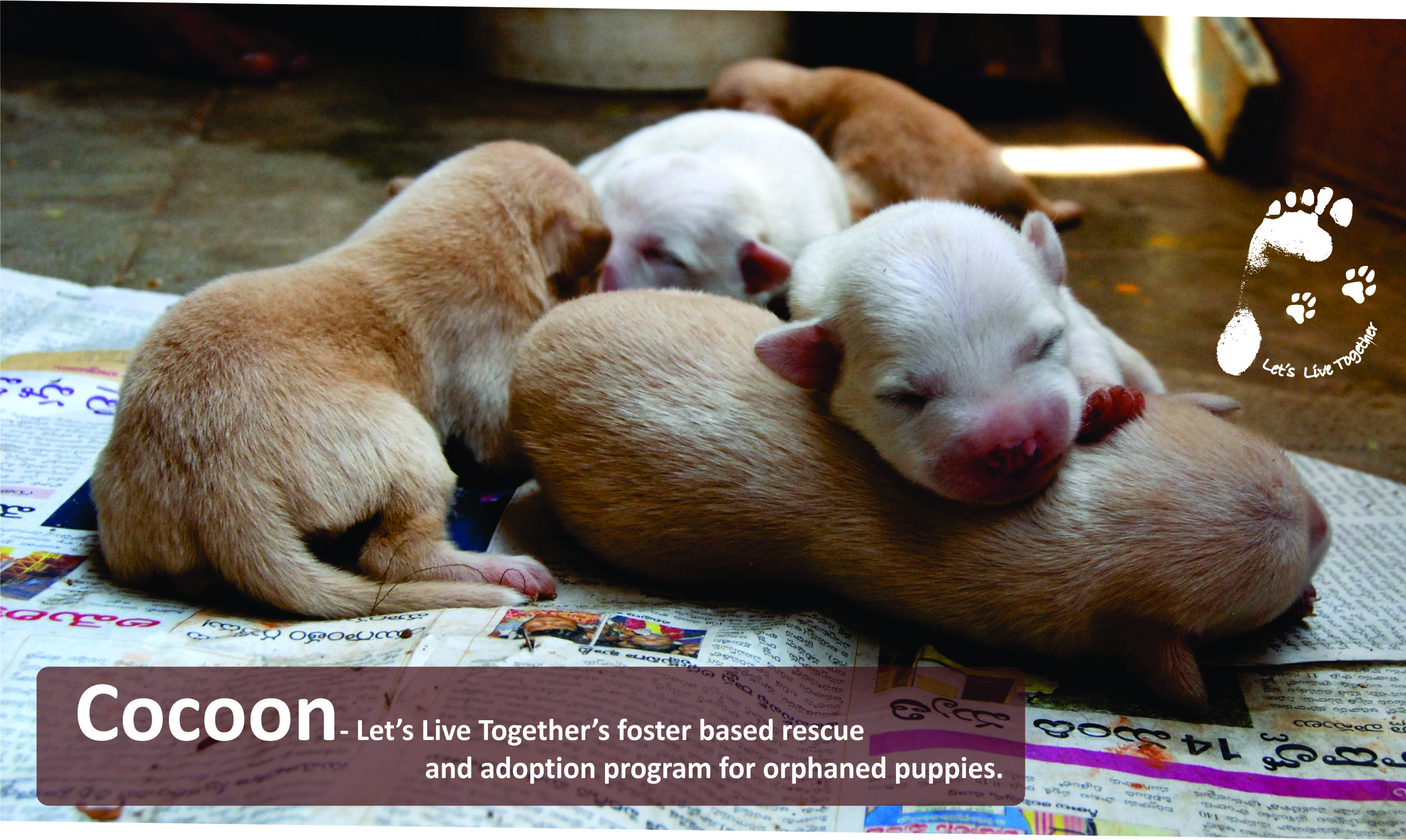 Save Orphaned Puppies.