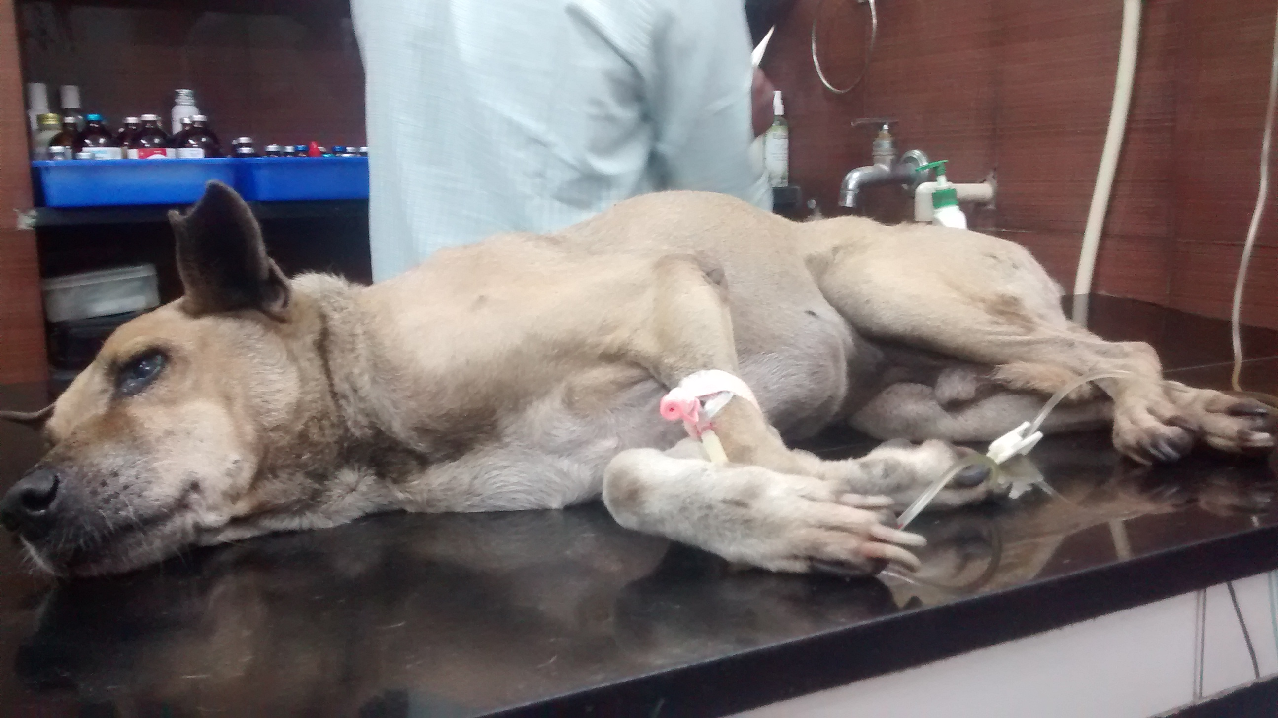 Centre for recovery and rehabilitation for injured/sick strays