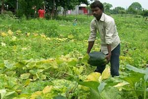 Sponsor sustainable farm training and help prevent farmer-suicides
